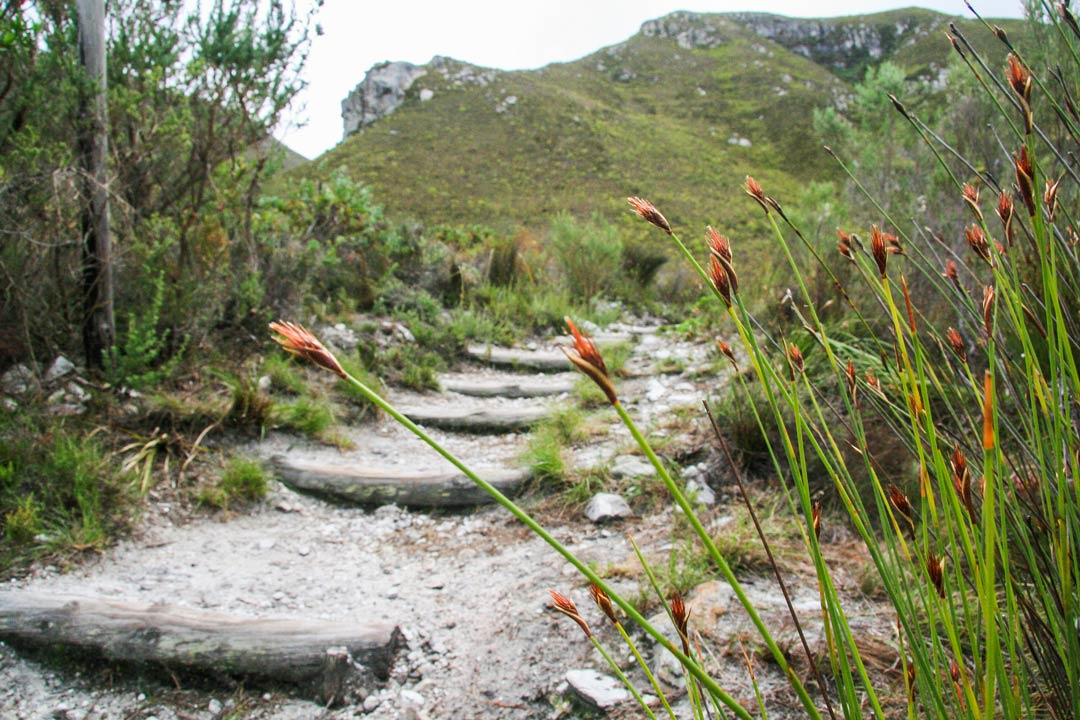 hermanus nature activities